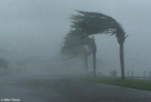 Palm Tree hurricane