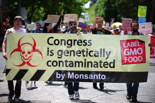 globalization monsanto Monsanto, however, is taking the opposition's accession to power in stride, having announced plans last summer to build a $150 million non-gm seed plant in the strife-ridden country (part of a drive to spend more than half a billion dollars updating and expanding plants in, france, romania, hungary, and turkey.