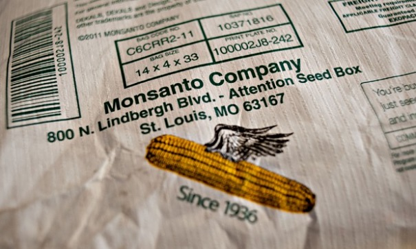 Monsanto GM or GMO maize