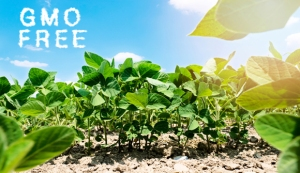 No GMO Agriculture